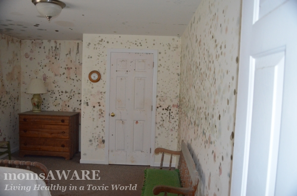 Mold Growth in Home